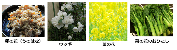 卯の花 菜の花_2