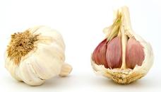 garlic-1808_130